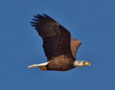 Jelly Fish & Others bald eagle